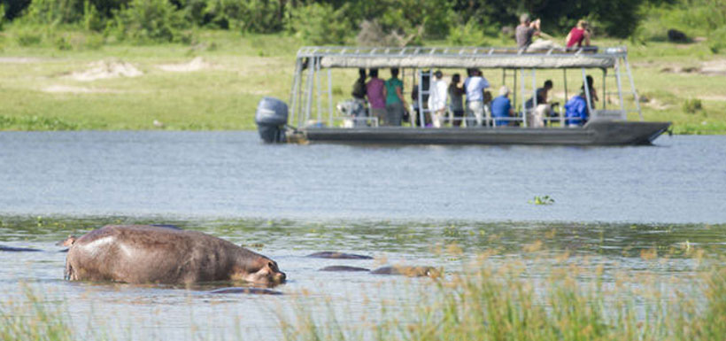 tourist boat near hippos in water