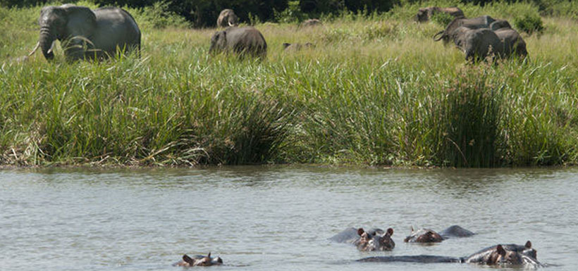 hippos wading with elephants nearby