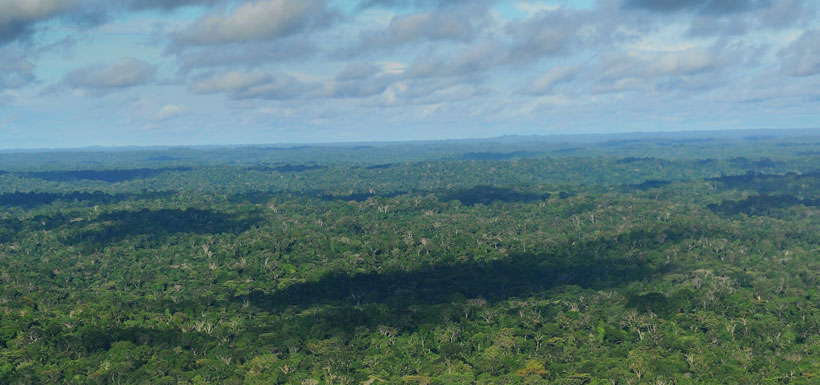 Rainforest from the air