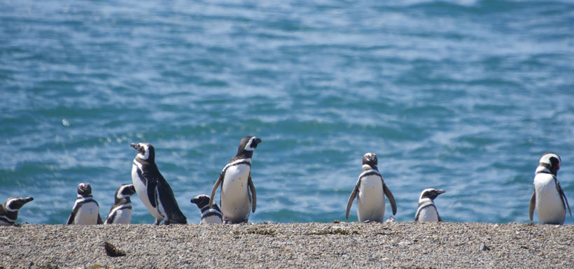 penguins line up on the shore